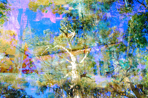Wall Art - the ghostly gum