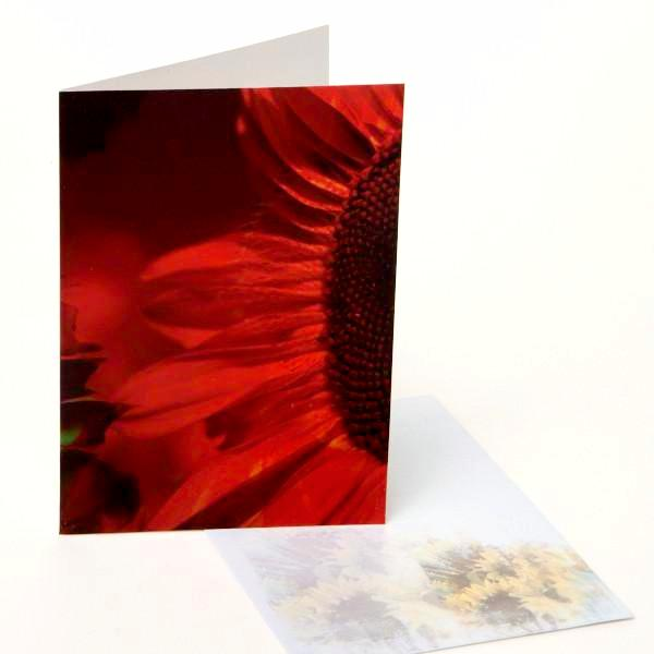 Greeting Cards / Sunflowers 4