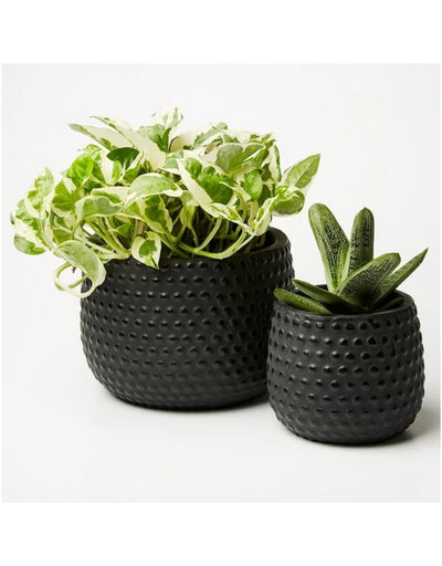 Hobnail Planter Set Black - Say It Sister