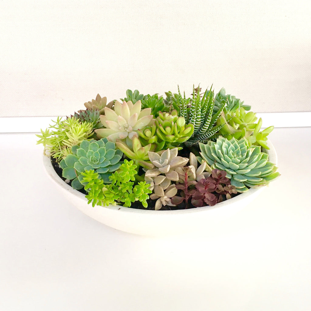 Modern Mixed Succulent Bowl (White)