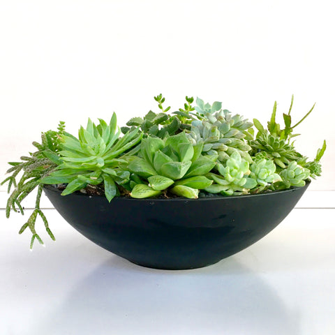 Modern Mixed Succulent Bowl (Black)