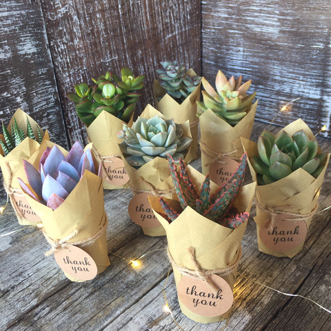 Jiffy Pot or Kraft Paper Wrapped Succulents