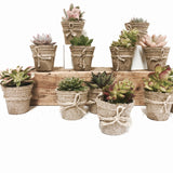 Jiffy Pot Succulents