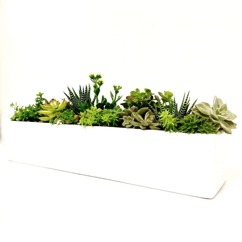 Long Rectangle Mixed Succulent Bowl