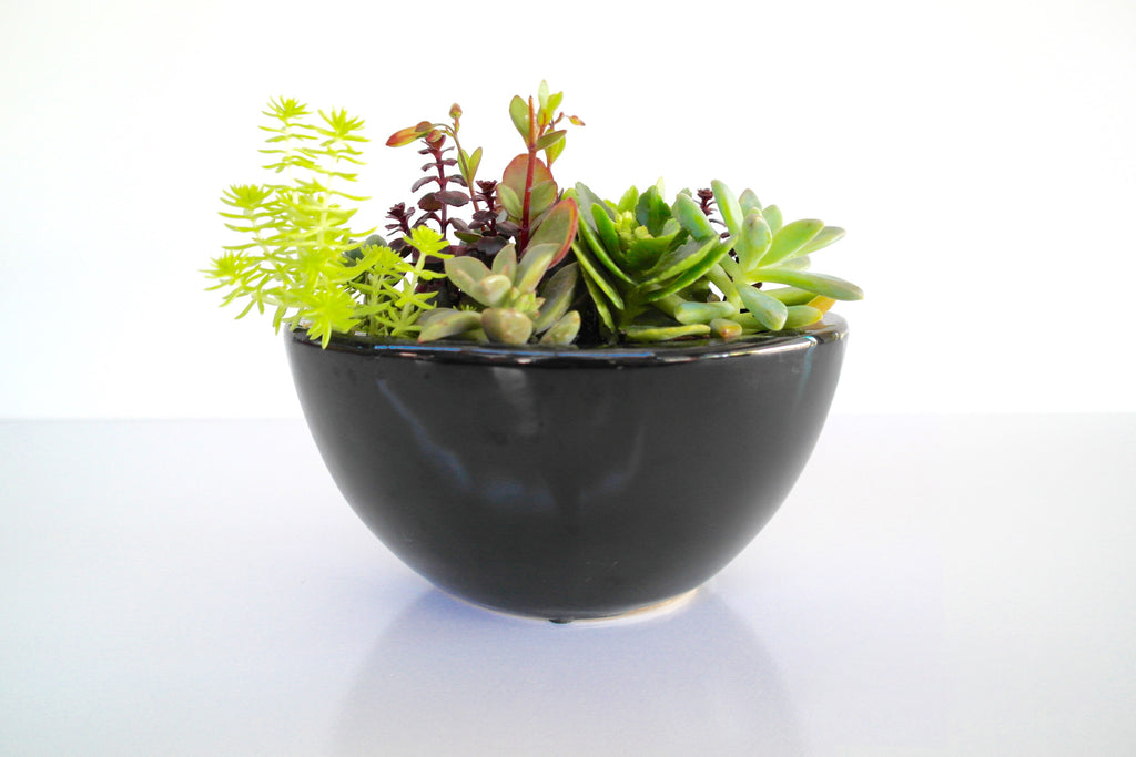 Oval Mixed Succulent Bowl