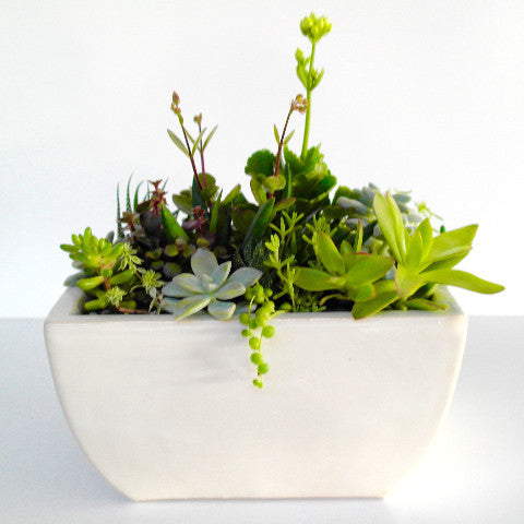Rectangle Mixed Succulent Bowl