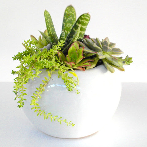 Round Mixed Succulent Bowl