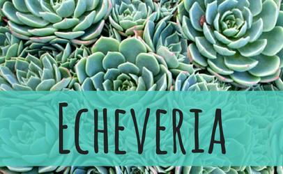 Succulent Planet - Succulent & Cacti Plants, Bowls, Gifts, Outdoor