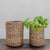 Set of Water Hyacinth Canisters