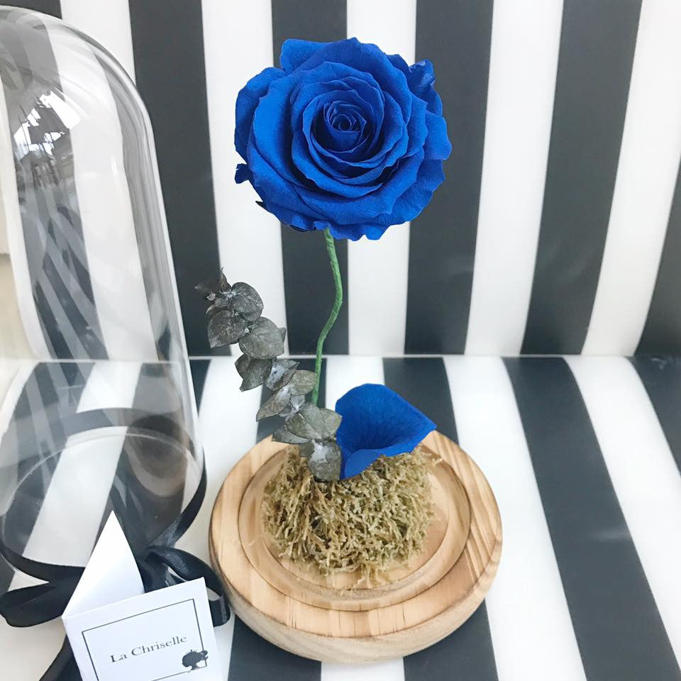 藍寶石版美女與野獸之玫瑰 Beauty and the Beast Preserved Navy Rose Flower
