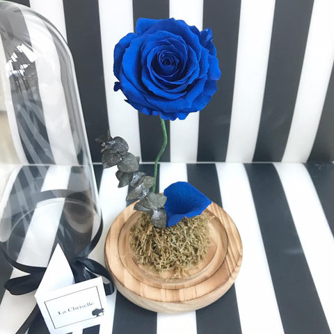 Beauty and the Beast Preserved Navy Rose Flower