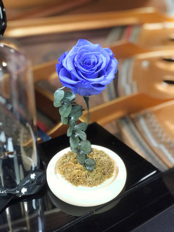 紫色美女與野獸之保鮮玫瑰 永生花Purple Beauty and the Beast Preserved Rose Flower