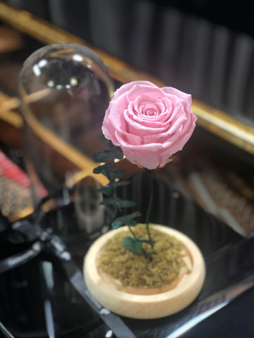 美女與野獸之粉紅玫瑰保鮮花 Beauty and the Beast Preserved Pink Rose Flower