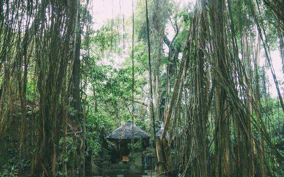 Experience Your Greatest Romantic Escapade in Ubud