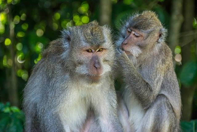 Must-Visit Animal Sanctuaries in Southeast Asia