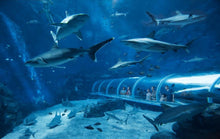 S.E.A. Aquarium Singapore Admission Ticket