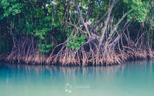 Bintan Island Mangrove Fireflies Day Tour, Indonesia