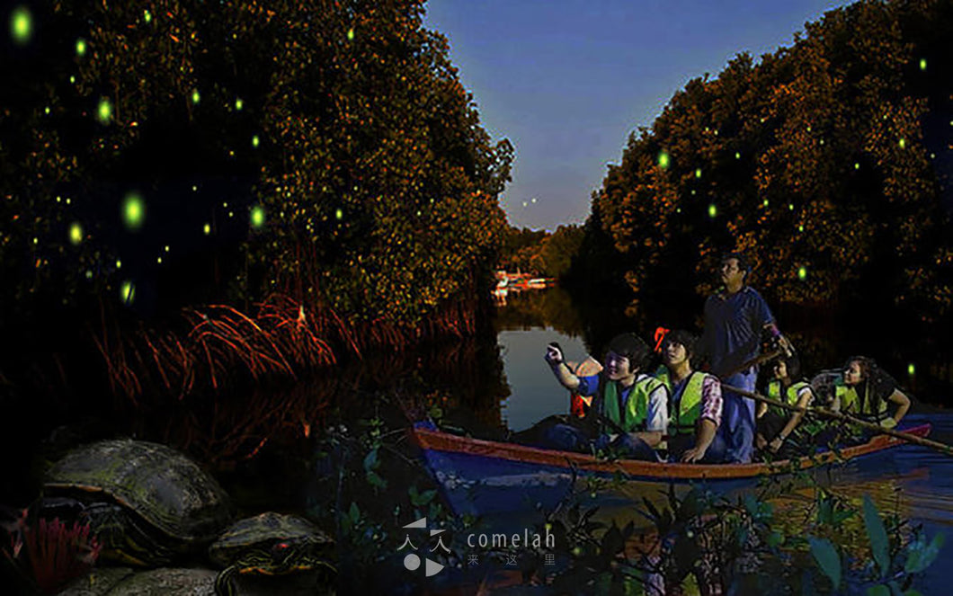 Bintan Island Mangrove Fireflies Day Tour Indonesia