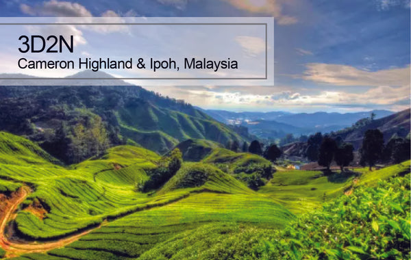 3D2N Cameron Highlands and Ipoh Trip, Malaysia