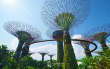 Gardens By The Bay + OCBC Skyway + Christmas Wonderland