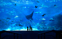 SEA_Aquarium_Promotion_Singapore