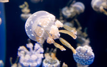 SEA_Aquarium_Tickets_Promotion_Singapore