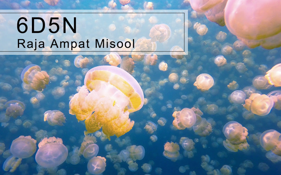 6D5N Raja Ampat Misool Jellyfish lake, West Papua Indonesia