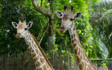 Cheap_Singapore_Zoo_Tickets