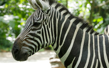 Discount_Zoo_Tickets_Singapore