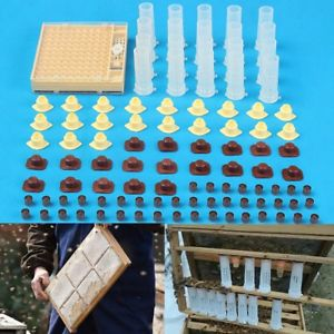 Complete Queen Rearing Cupkit System Bee Cage Beekeeping With 100 Cell Cups New