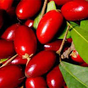Alcoa Prime 20Pcs Rare Miracle Fruit Seed Synsepalum Dulcificum Seeds Garden Plant Fresh New