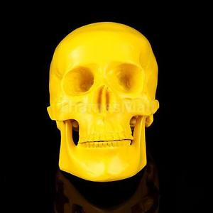 Human Skull Resin Replica Skull Medical Collectable Model--Yellow