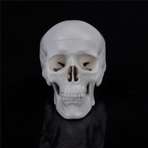 Teaching Mini Skull Human Anatomical Anatomy Head Medical Model Convenient LA