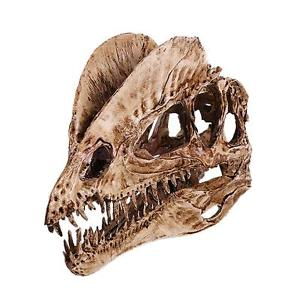 Alcoa Prime Realistic Dinosaur Skull Dilophosaurus Head Skeleton Aquarium Decor White
