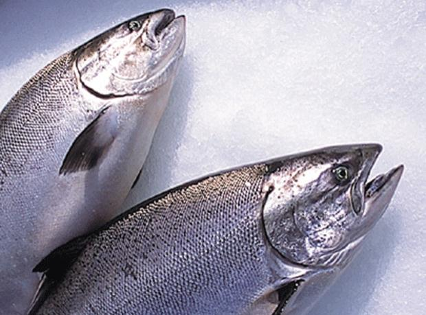 NZ King Salmon - Fresh Whole Salmon Approx. 2.5 kg $65/kg Deposit Only Order by Tue for Sat