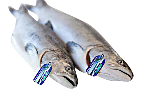NZ King Salmon - Fresh Whole Salmon Approx. +/-2.3kg-2.5kg $55/kg Deposit Only -Please order 1 week in advance  (Usually arrives on Fri)
