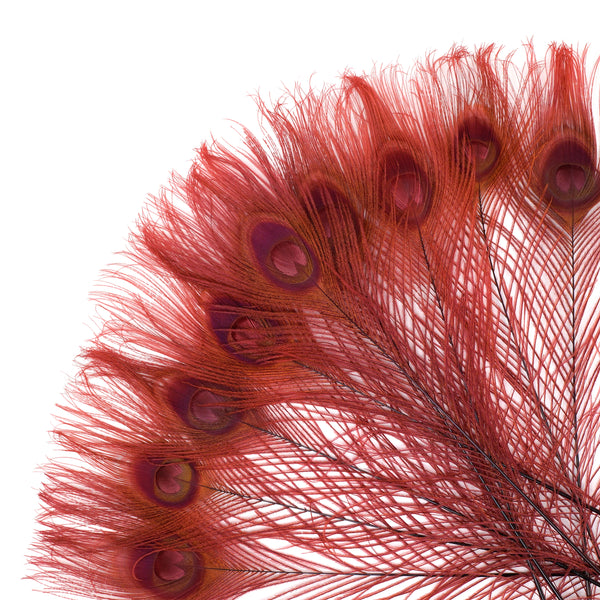 "Zucker™ Bleached Peacock Tail Feathers with Full Eyes - 8 - 15"" -100 pcs - Burgundy"