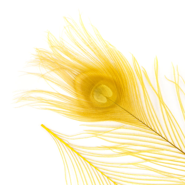 "Zucker™ Bleached Peacock Tail Feathers with Full Eyes - 8 - 15"" -100 pcs - Gold"