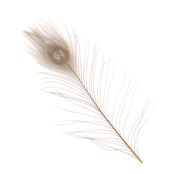 "Zucker™ Bleached Peacock Tail Feathers with Full Eyes - 8 - 15"" -100 pcs - Iris"