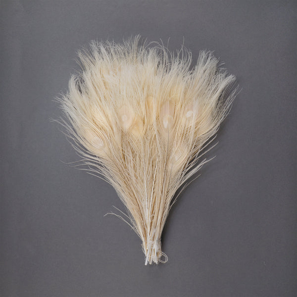 "Zucker™ Bleached Peacock Tail Feathers with Full Eyes - 8 - 15"" -100 pcs - Ivory"