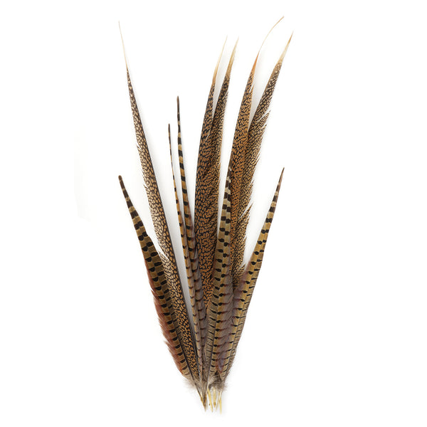Packaged Pheasant Tails Assorted Natural
