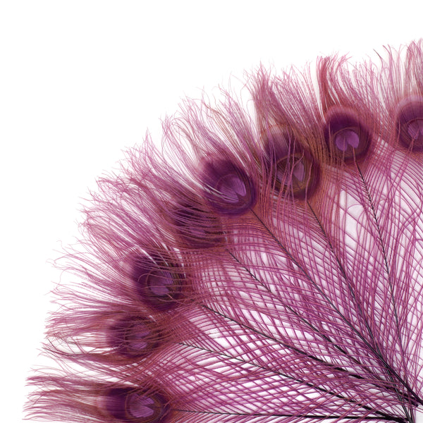 "Zucker™ Bleached Peacock Tail Feathers with Full Eyes - 8 - 15"" -100 pcs - Purple"