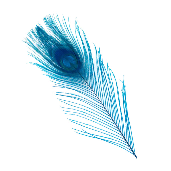 "Zucker™ Bleached Peacock Tail Feathers with Full Eyes - 8 - 15"" -100 pcs - Dark Turquoise"