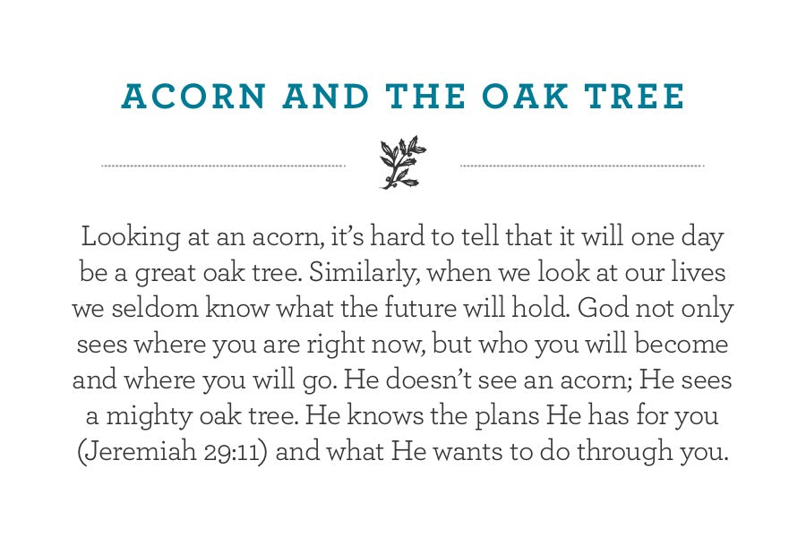 Looking at an acorn, it's hard to tell that it will one day be a great oak tree. Similarly, when we look at our lives we seldom know what the future will hold. God not only sees where you are right now, but who you will become and where you will go. He doesn't see an acorn; He sees a mighty oak tree. He knows the plans He has for you (Jeremiah 29:11) and what He wants to do through you.
