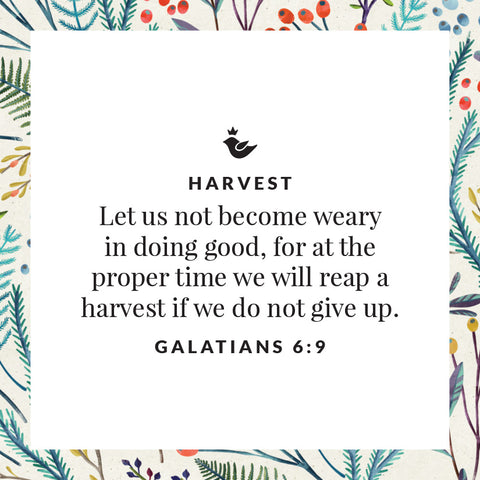 Let us not become weary in doing good, for at the proper time we will reap a harvest if we do not give up. Galatians 6:9
