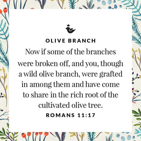 Now if some of the branches were broken off, and you, though a wild olive branch, were grafted in among them and have come to share in the rich root of the cultivated olive tree. Romans 11:17