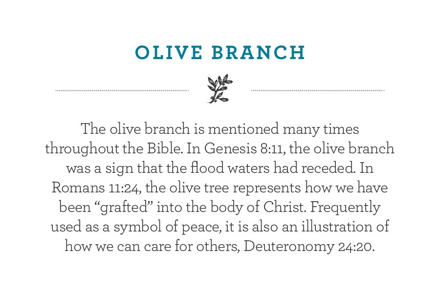 "The olive branch is mentioned many times throughout the Bible. In Genesis 8:11, the olive branch was a sign that the flood waters had receded. In Romans 11:24, the olive tree represents how we have been ""grafted"" into the body of Christ. Frequently used as a symbol of peace, it is also an illustration of how we can care for others, Deuteronomy 24:20."