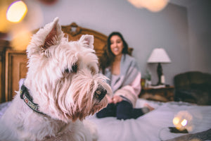 Apartment Living: Choosing The Right Pet Companion