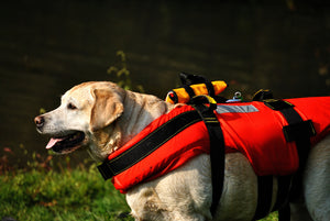 5 Natural Disaster Preparation Tips For Pet Owners