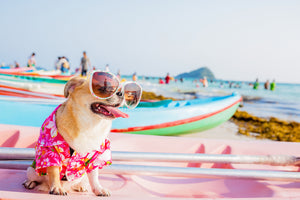 Dog Safety At The Beach